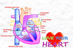 Love your heart words with heart in  snow white background. For heart care related work Stock Photos