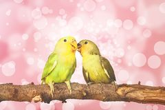 Lovebird on Blurred fairy lights background Royalty Free Stock Photo