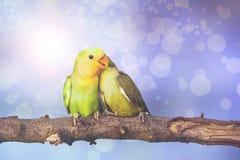 Lovebird on Blurred fairy lights background Stock Photos