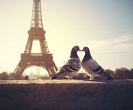 Lovebird silhouette on blurred eiffel tower background Stock Photo