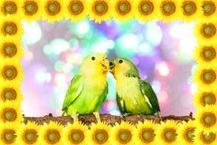 Lovebird on sunflower frame Stock Photos