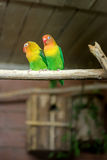 lovebirds obraz stock