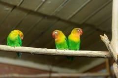 lovebirds Fotografering för Bildbyråer
