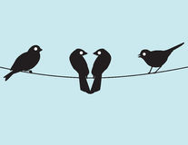 Lovebirds ed amici Fotografia Stock