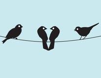 Lovebirds et amis Photographie stock