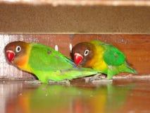 Lovebirds gear Royalty Free Stock Photos