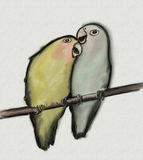 Lovebirds hand drawn with paper texture. Agapornis roseicollis Stock Image