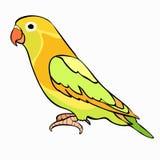 Lovebirds papuzi z czerwonym belfrem również zwrócić corel ilustracji wektora Zdjęcia Stock