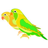 Lovebirds parrot with a red beak. vector illustration Stock Photos