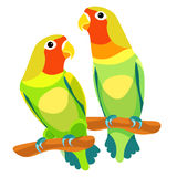 Lovebirds parrot with a red head vector illustration Stock Image