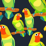 Lovebirds parrot with a red head vector illustration Stock Photography