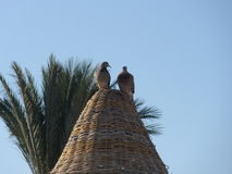 Lovebirds sunshade Στοκ Εικόνα