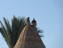 Lovebirds on sunshade. Lovebirds sitting on wooden sunshade Stock Image
