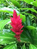 Vivid colours in nature. Loved this flower, such vivid contrasting colours I had to take a close-up Stock Photography