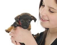 Loved Puppy Royalty Free Stock Photos