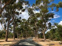 Lovekin drev, väg med sockereukalyptusträdet med plattor i frontม, Arkivfoto