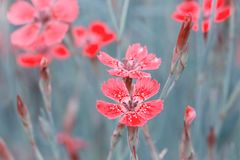 Lovely abstract background with tiny pink flowers. Soft focus photo. stock photo