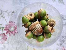 Lovely acorns in wine glass. Shiny, bright, green acorns along with one large brown, distressed acorn, in wine glass, set on placemat. Bright version Royalty Free Stock Photo