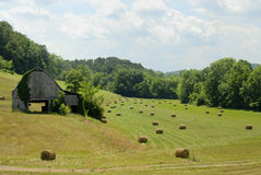A lovely American idyllic pastoral scene. Of down on the farm in Jefferson Gainger County, Tennessee, USA in early July Royalty Free Stock Photo