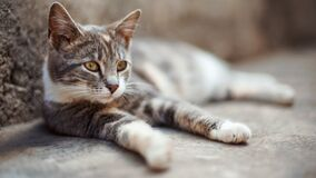 Free Lovely Ash Grey Cat Relax On The Stone Floor Outdoors Stock Photo - 183663800