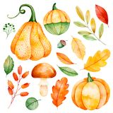 Watercolor fall leaves, branches,pumpkins etc. royalty free illustration