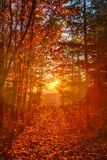 Lovely Autumn Landscape Panorama Royalty Free Stock Images