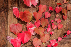Lovely autumn leaves Stock Images