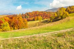 Lovely autumn scenery of Carpathian mountains. Forest in fall colors behind the grassy meadow. mighty ridge in the distance under the gorgeous sky royalty free stock image