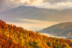 Lovely autumn scenery in mountains at sunrise. Forest in fall colors. fog in the distant valley stock photos
