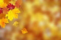 Lovely autumn season colorful leaves background Stock Photo