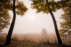 Lovely autumn trees in the fog Stock Photography