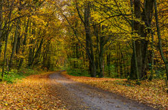 Asphalt road through forest in yellow foliage Royalty Free Stock Images