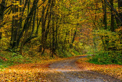 Asphalt road through forest in yellow foliage Royalty Free Stock Photography