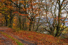 Dirt road in forest with reddish foliage Stock Photos