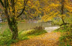 Yellow trees on rocky shore of the river Royalty Free Stock Images