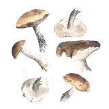 Lovely autunm mushrooms Stock Photos