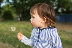 Lovely baby blowing on blowball Royalty Free Stock Photos