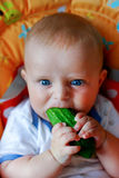Lovely baby boy eating cucumber Stock Image