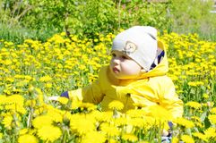 Lovely baby among dandelions. Baby age of 8 months among dandelions Royalty Free Stock Images