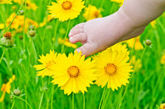 Lovely baby foot Stock Image