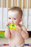 Lovely baby gnaws rattle. Lovely baby age of 9 months gnaws rattle Stock Image