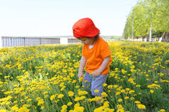 Lovely baby walking against dandelions Royalty Free Stock Image