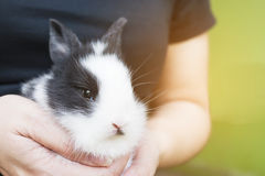 Lovely baby 2 weeks Thai rabbit Stock Photography