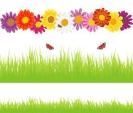 Lovely background with flowers Royalty Free Stock Photo