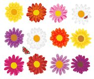 Lovely background with flowers Stock Image