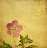 Lovely background image. Earthy background image with floral elements. useful design element Stock Images