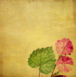 Lovely background image. Earthy background image with floral elements. useful design element Stock Photo