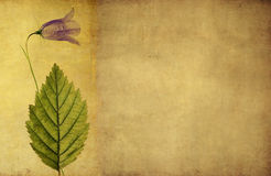 Lovely background image. Earthy background image with floral elements. useful design element Royalty Free Stock Photography