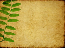 Lovely background image. Earthy background image with floral elements. useful design element Stock Photography