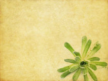 Lovely background image. Earthy background image with floral elements. useful design element Stock Photos